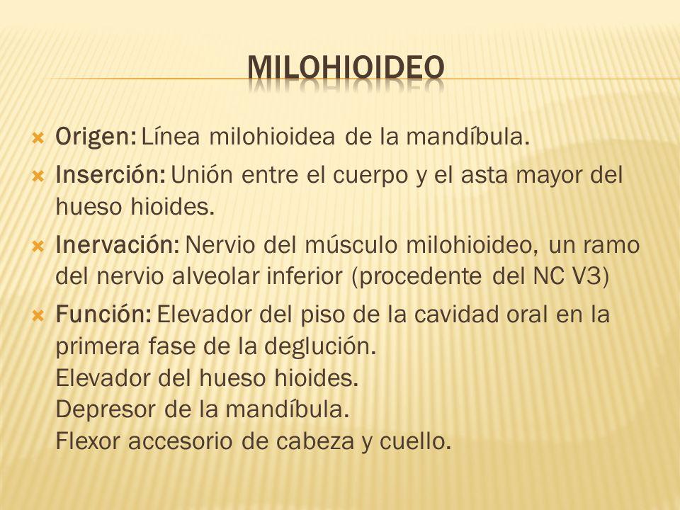 milohioideo Origen: Línea milohioidea de la mandíbula.