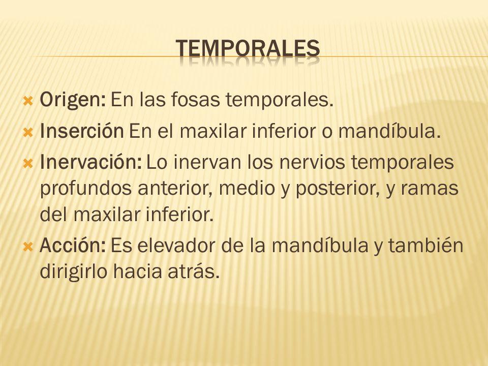temporales Origen: En las fosas temporales.