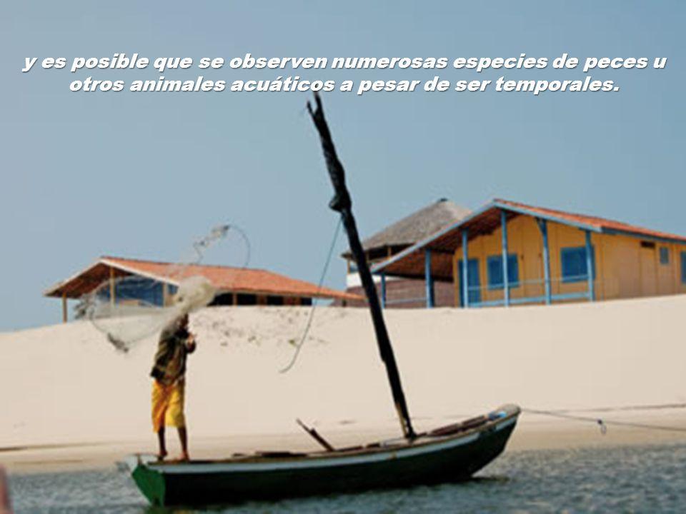 y es posible que se observen numerosas especies de peces u otros animales acuáticos a pesar de ser temporales.