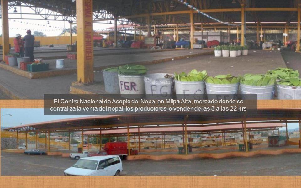 El Centro Nacional de Acopio del Nopal en Milpa Alta, mercado donde se centraliza la venta del nopal; los productores lo venden de las 3 a las 22 hrs