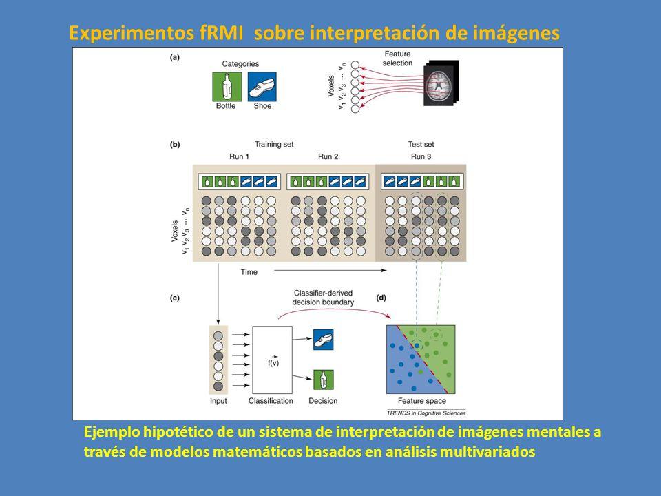 Experimentos fRMI sobre interpretación de imágenes