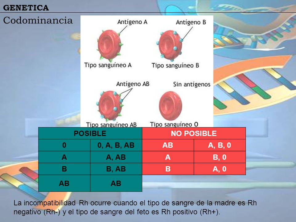 Codominancia POSIBLE NO POSIBLE 0, A, B, AB AB A, B, 0 A A, AB B, 0 B