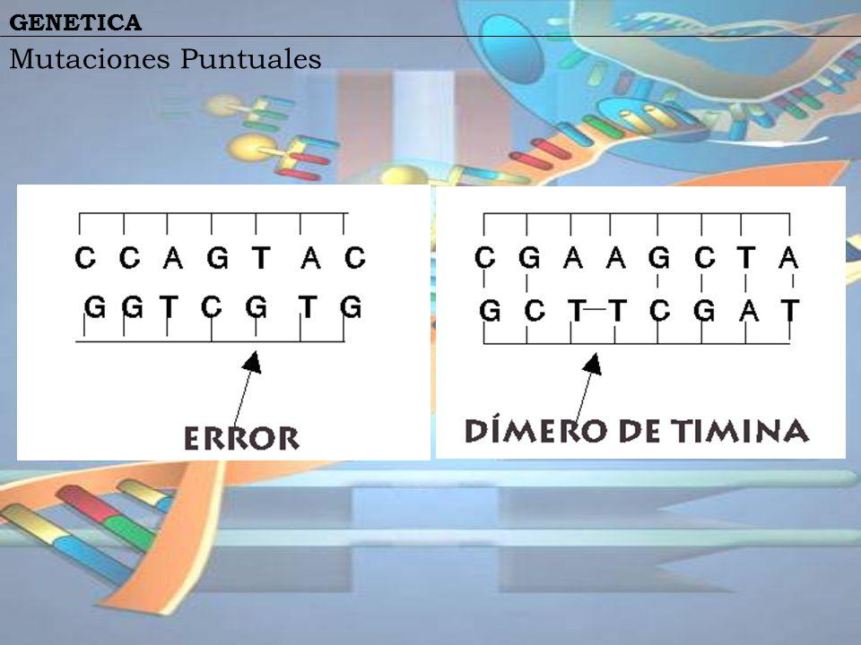 Mutaciones Puntuales