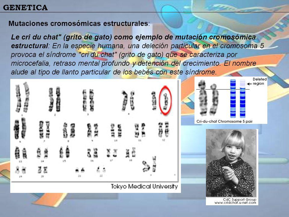 Mutaciones cromosómicas estructurales: