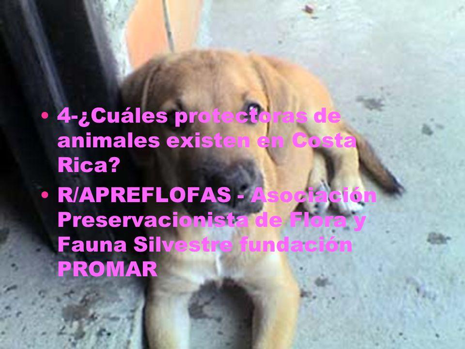 4-¿Cuáles protectoras de animales existen en Costa Rica