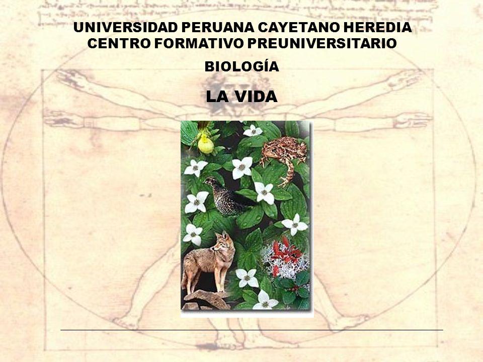 LA VIDA UNIVERSIDAD PERUANA CAYETANO HEREDIA