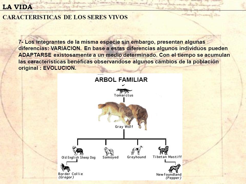LA VIDA CARACTERISTICAS DE LOS SERES VIVOS ARBOL FAMILIAR