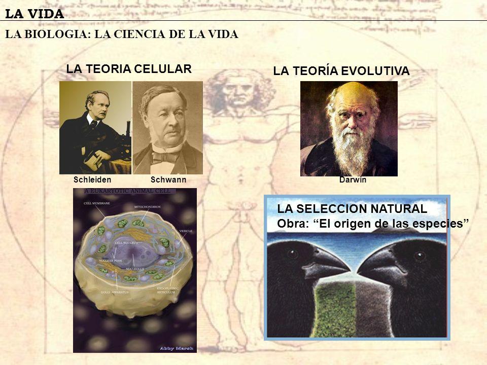 LA VIDA LA BIOLOGIA: LA CIENCIA DE LA VIDA LA TEORIA CELULAR