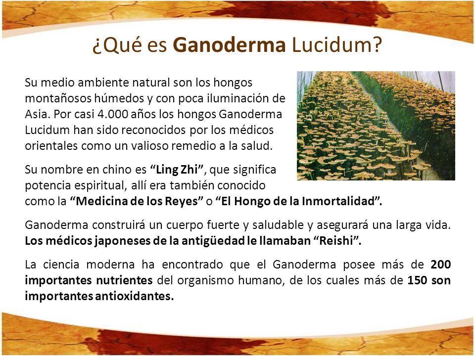 ¿Qué es Ganoderma Lucidum