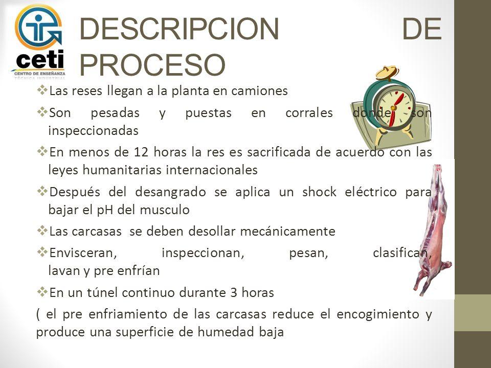 DESCRIPCION DE PROCESO