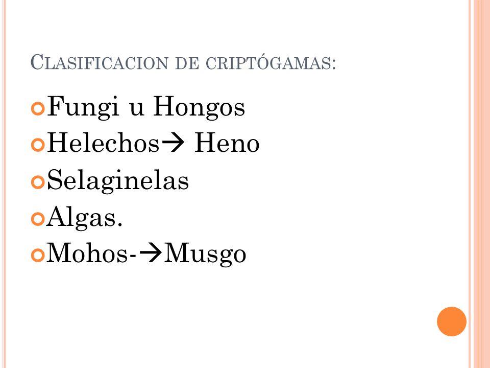 Clasificacion de criptógamas: