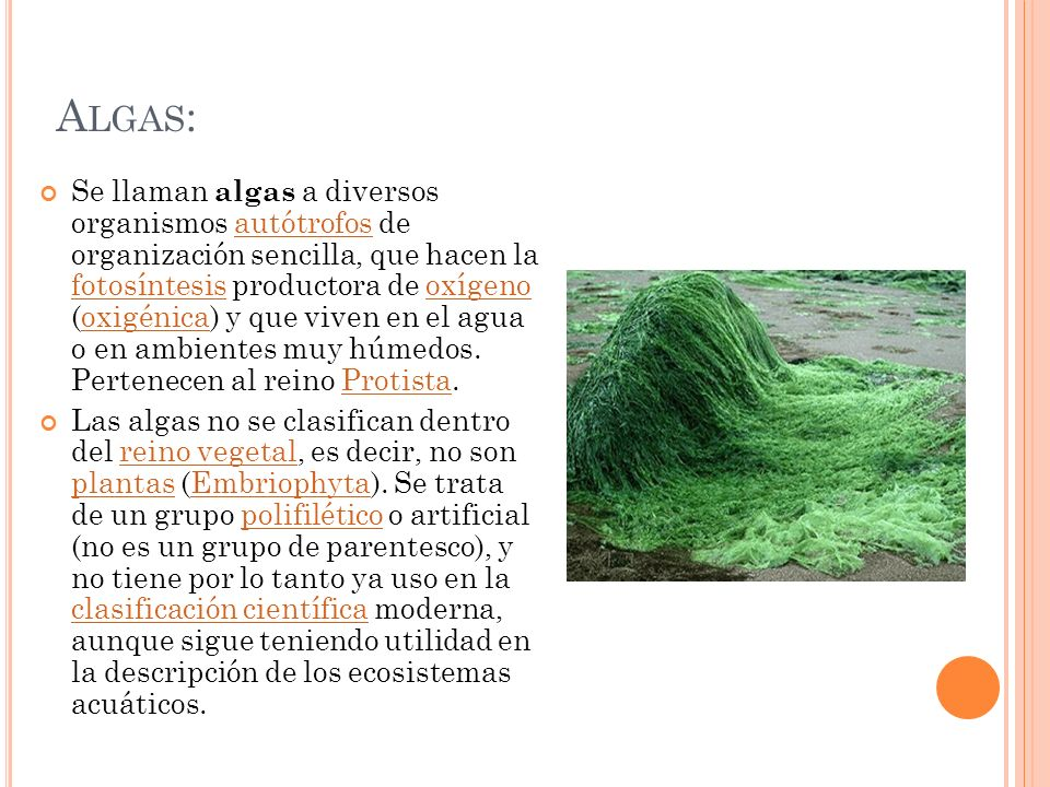 Algas: