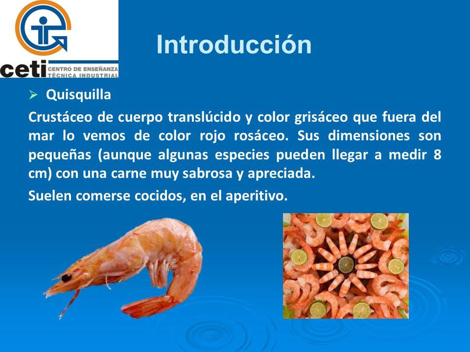 Introducción Quisquilla