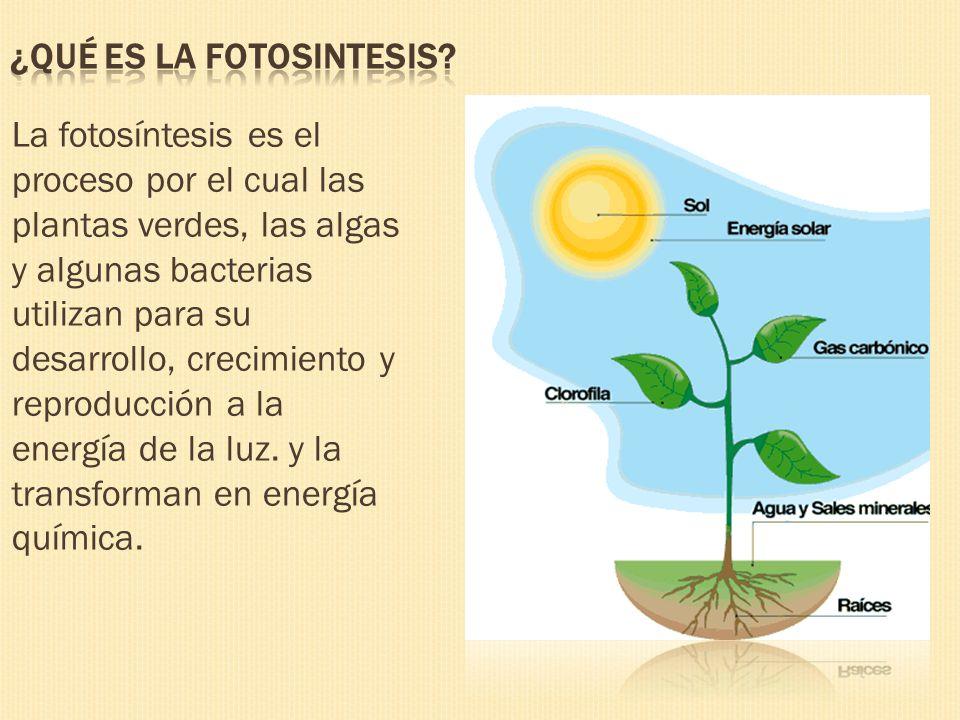Fases de la fotosintesis wikipedia 10