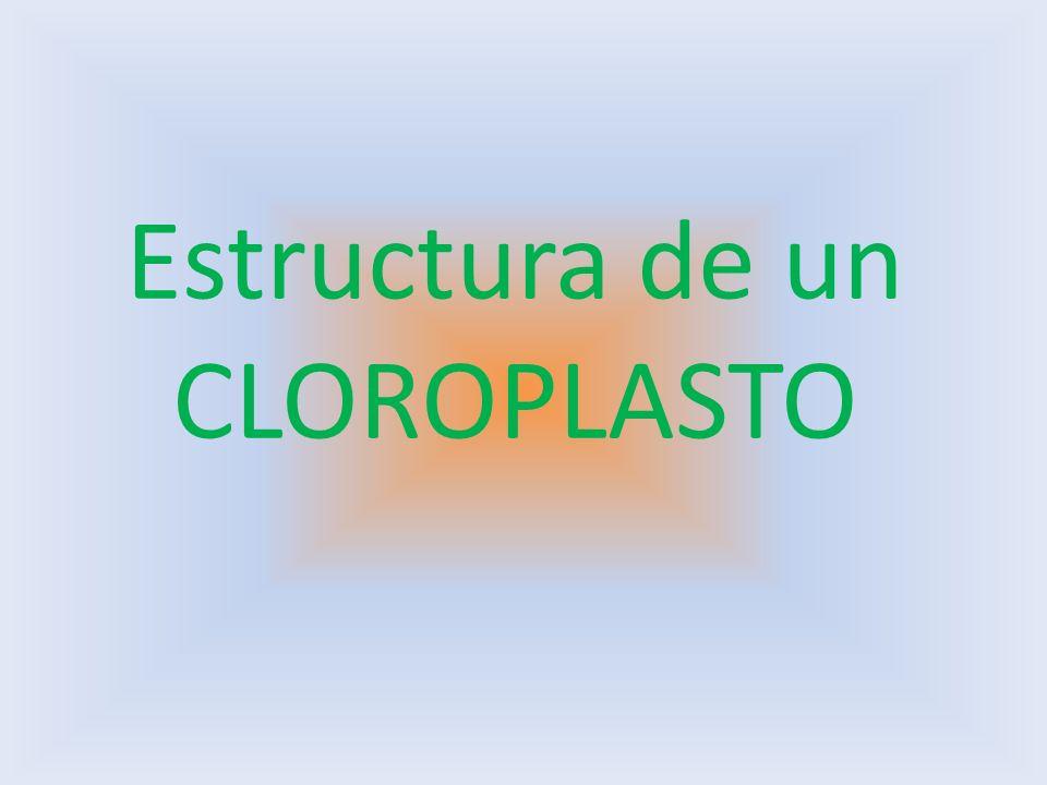 Estructura de un CLOROPLASTO