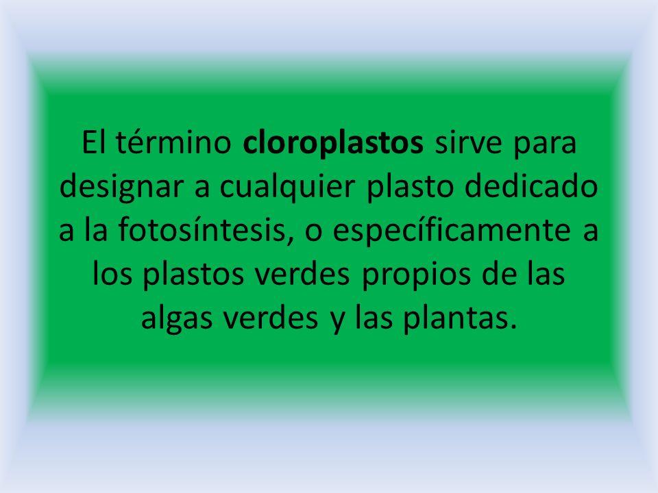 El término cloroplastos sirve para designar a cualquier plasto dedicado a la fotosíntesis, o específicamente a los plastos verdes propios de las algas verdes y las plantas.