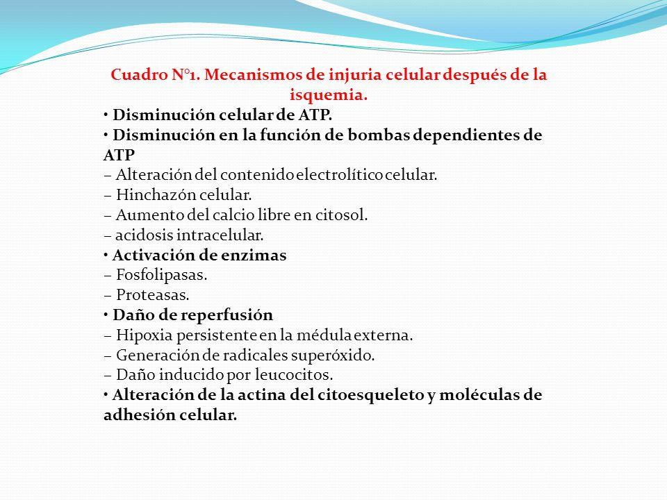 Cuadro N°1. Mecanismos de injuria celular después de la