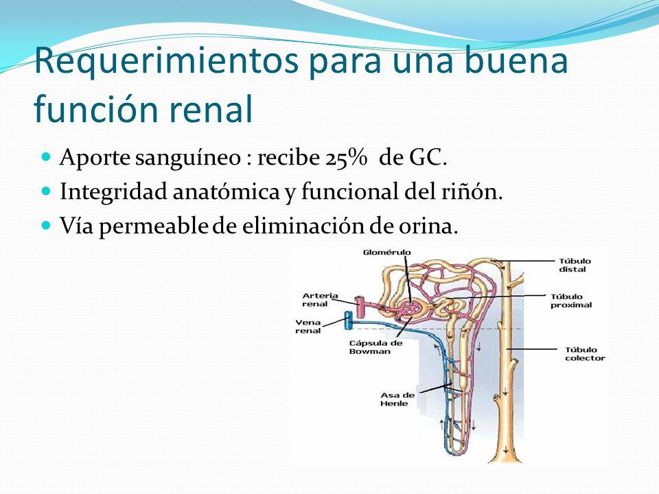 Requerimientos para una buena función renal