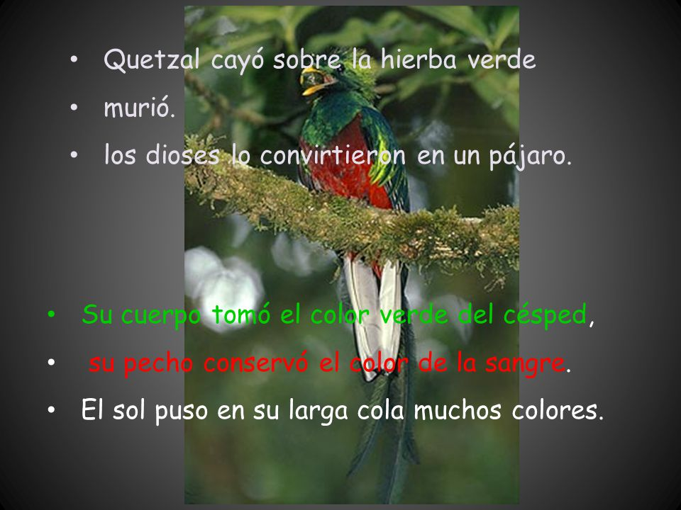 Quetzal cayó sobre la hierba verde