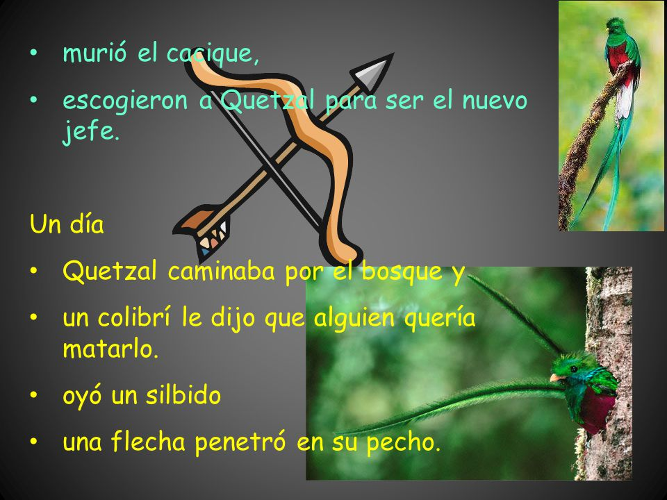 murió el cacique, escogieron a Quetzal para ser el nuevo jefe. Un día. Quetzal caminaba por el bosque y.