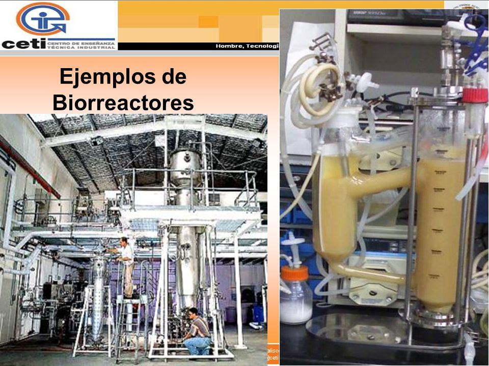 Ejemplos de Biorreactores