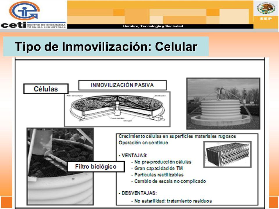 Tipo de Inmovilización: Celular