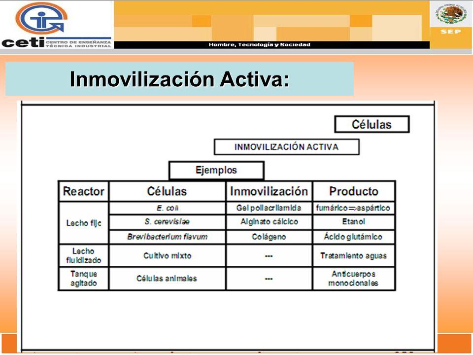 Inmovilización Activa: