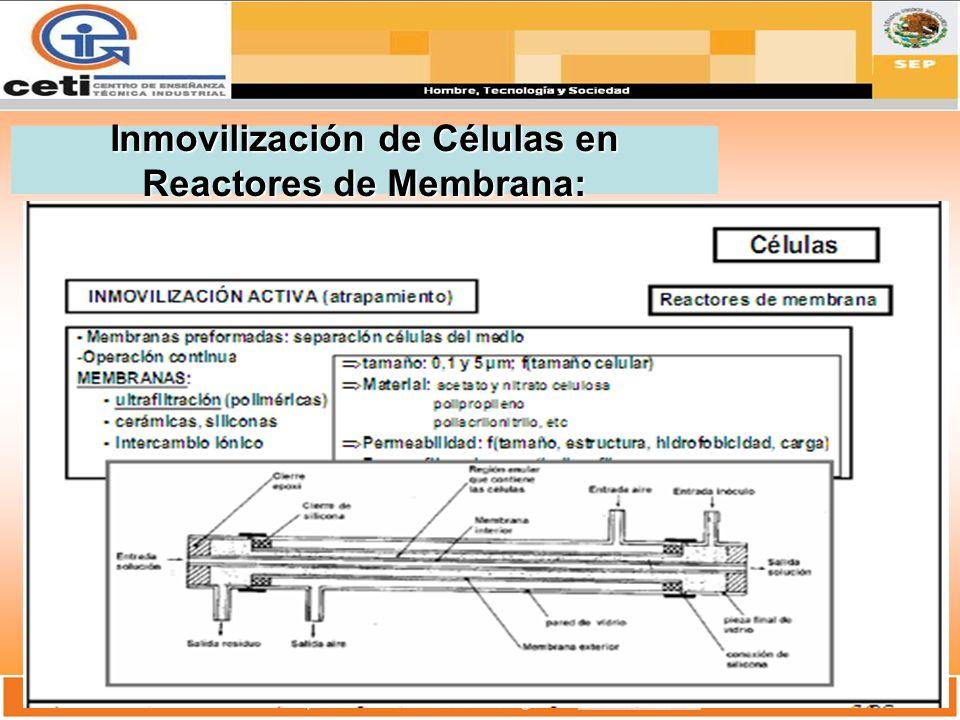 Inmovilización de Células en Reactores de Membrana: