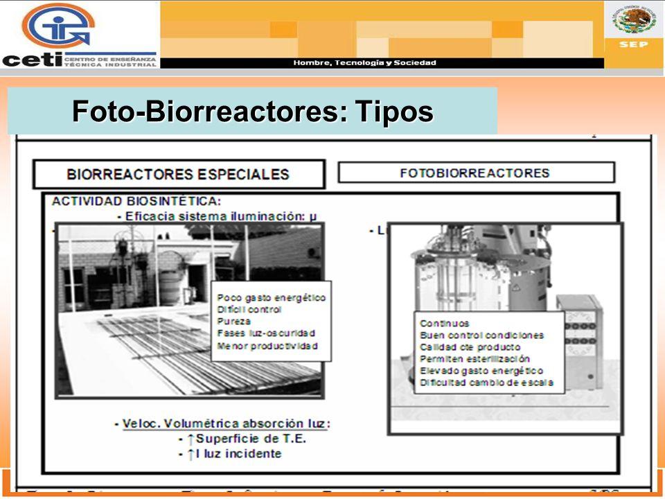 Foto-Biorreactores: Tipos