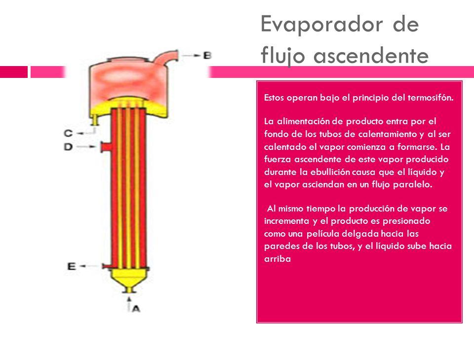 Evaporador de flujo ascendente