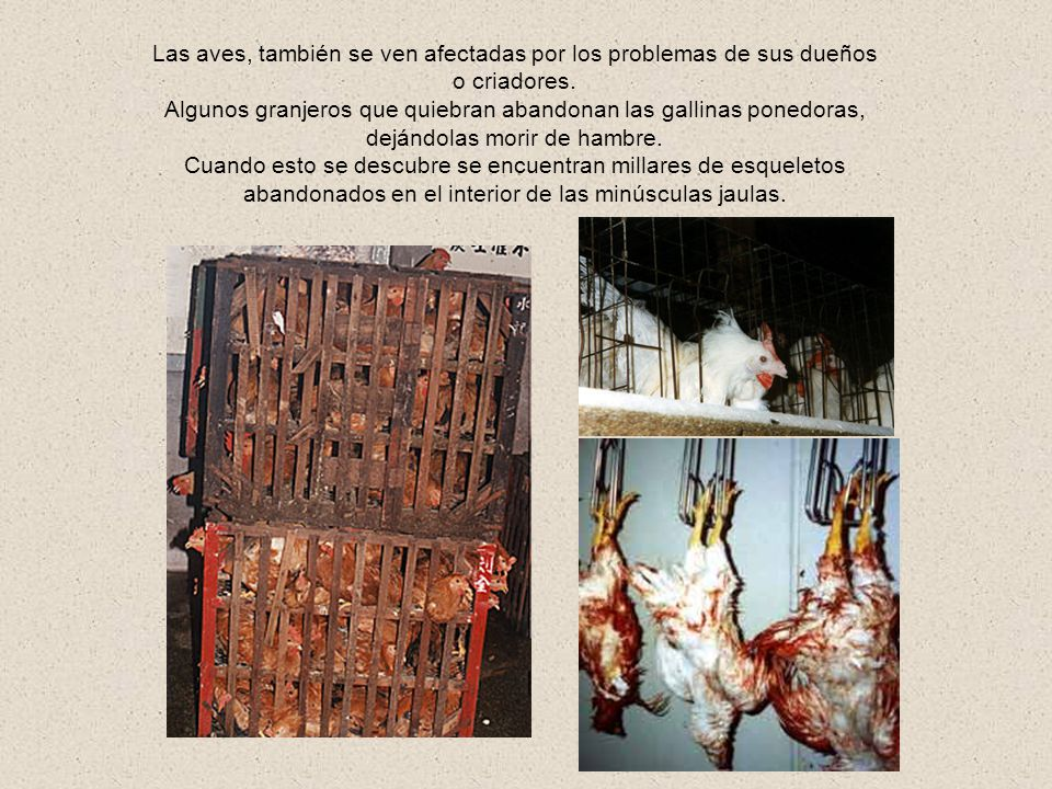 Las aves, también se ven afectadas por los problemas de sus dueños o criadores.