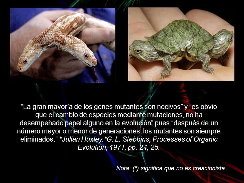 La gran mayoría de los genes mutantes son nocivos y es obvio que el cambio de especies mediante mutaciones, no ha desempeñado papel alguno en la evolución pues después de un número mayor o menor de generaciones, los mutantes son siempre eliminados. *Julian Huxley.*G. L. Stebbins, Processes of Organic Evolution, 1971, pp. 24, 25.