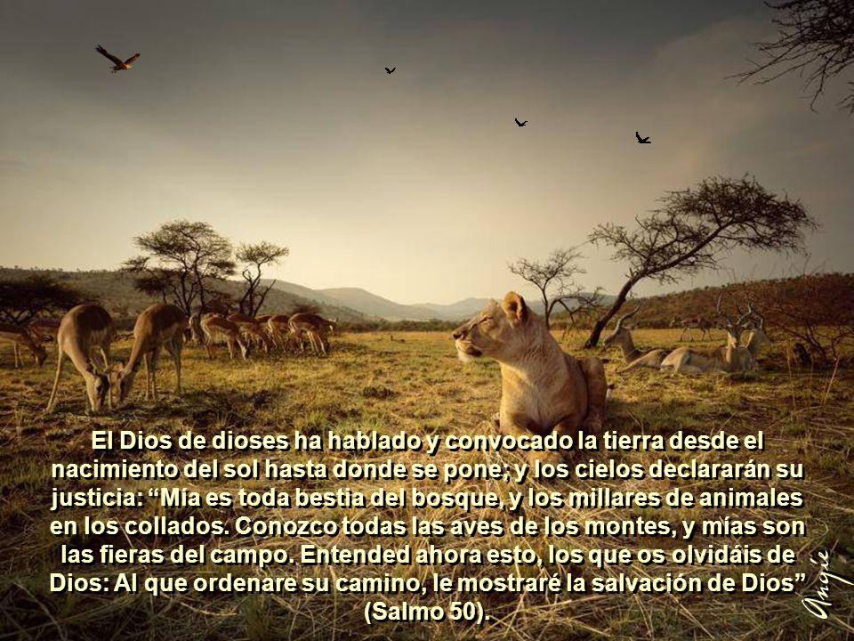El Dios de dioses ha hablado y convocado la tierra desde el nacimiento del sol hasta donde se pone; y los cielos declararán su justicia: Mía es toda bestia del bosque, y los millares de animales en los collados. Conozco todas las aves de los montes, y mías son las fieras del campo. Entended ahora esto, los que os olvidáis de Dios: Al que ordenare su camino, le mostraré la salvación de Dios (Salmo 50).