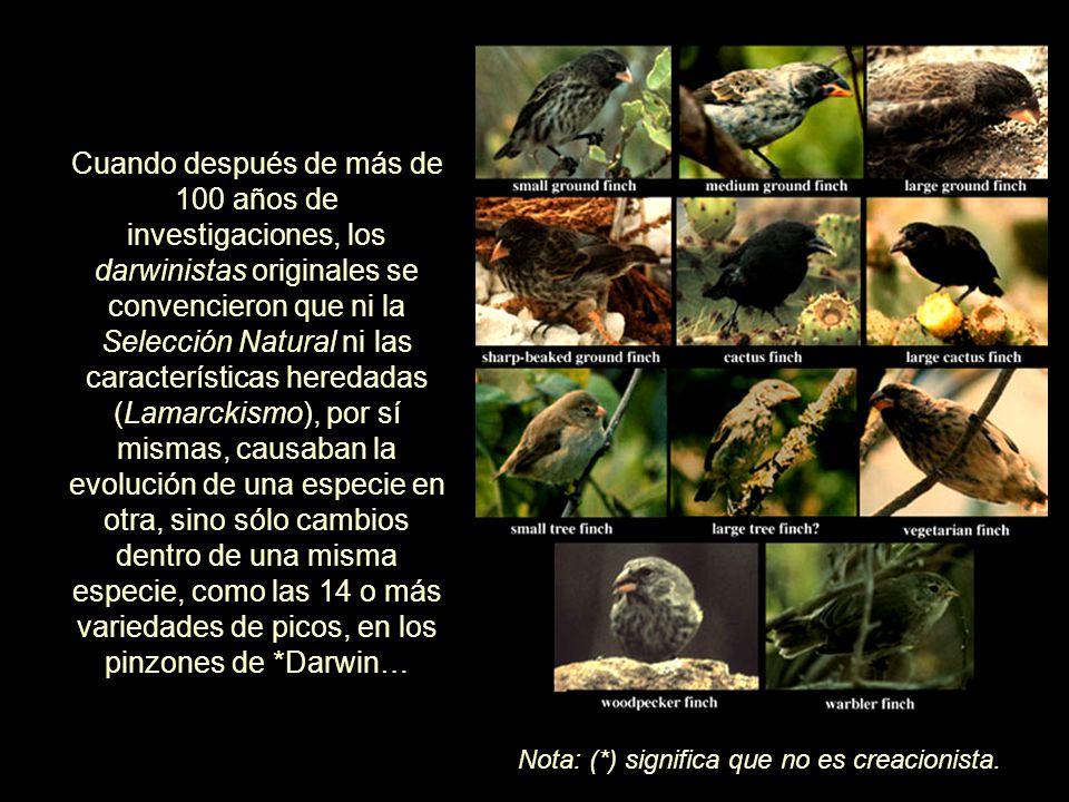 Cuando después de más de 100 años de investigaciones, los darwinistas originales se convencieron que ni la Selección Natural ni las características heredadas (Lamarckismo), por sí mismas, causaban la evolución de una especie en otra, sino sólo cambios dentro de una misma especie, como las 14 o más variedades de picos, en los pinzones de *Darwin…