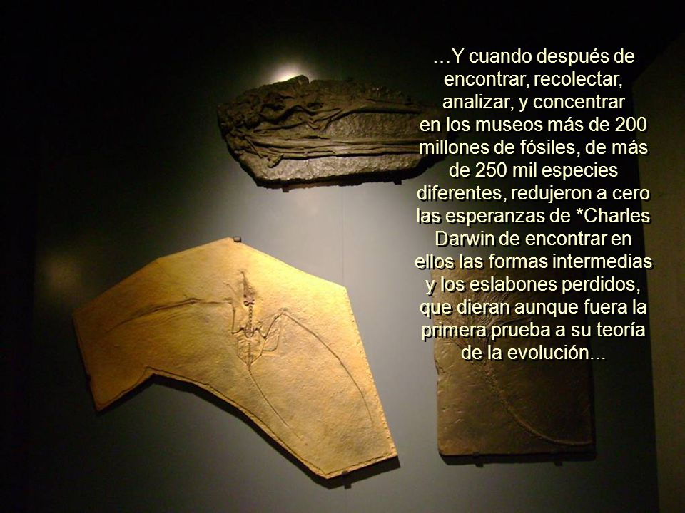 …Y cuando después de encontrar, recolectar, analizar, y concentrar en los museos más de 200 millones de fósiles, de más de 250 mil especies diferentes, redujeron a cero las esperanzas de *Charles Darwin de encontrar en ellos las formas intermedias y los eslabones perdidos, que dieran aunque fuera la primera prueba a su teoría de la evolución...