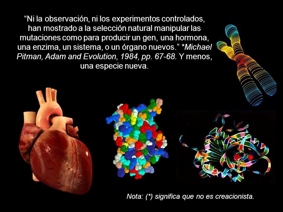 Ni la observación, ni los experimentos controlados, han mostrado a la selección natural manipular las mutaciones como para producir un gen, una hormona, una enzima, un sistema, o un órgano nuevos. *Michael Pitman, Adam and Evolution, 1984, pp. 67-68. Y menos, una especie nueva.
