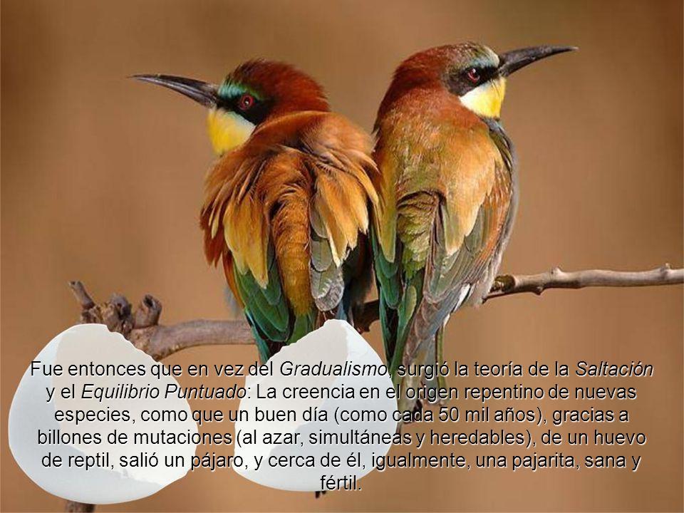 Fue entonces que en vez del Gradualismo, surgió la teoría de la Saltación y el Equilibrio Puntuado: La creencia en el origen repentino de nuevas especies, como que un buen día (como cada 50 mil años), gracias a billones de mutaciones (al azar, simultáneas y heredables), de un huevo de reptil, salió un pájaro, y cerca de él, igualmente, una pajarita, sana y fértil.