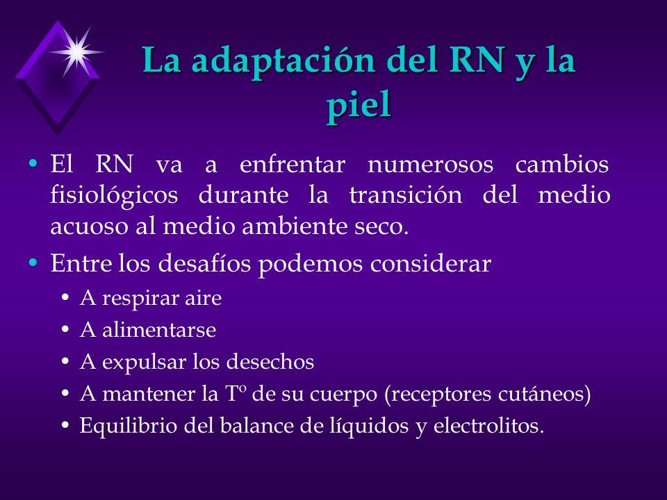 La adaptación del RN y la piel