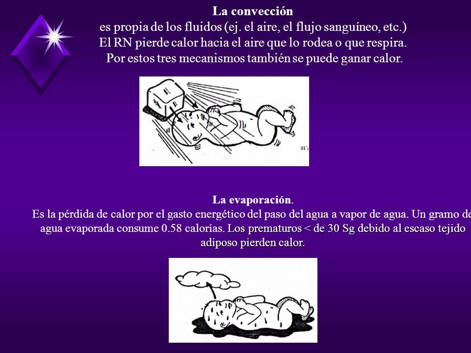 es propia de los fluidos (ej. el aire, el flujo sanguíneo, etc.)