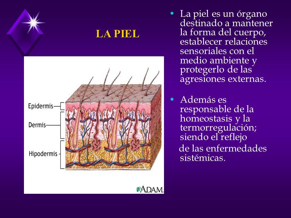 La piel es un órgano destinado a mantener la forma del cuerpo, establecer relaciones sensoriales con el medio ambiente y protegerlo de las agresiones externas.