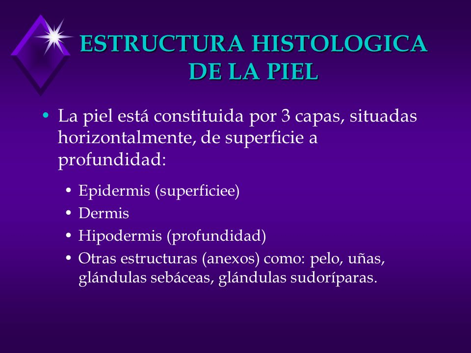 ESTRUCTURA HISTOLOGICA DE LA PIEL