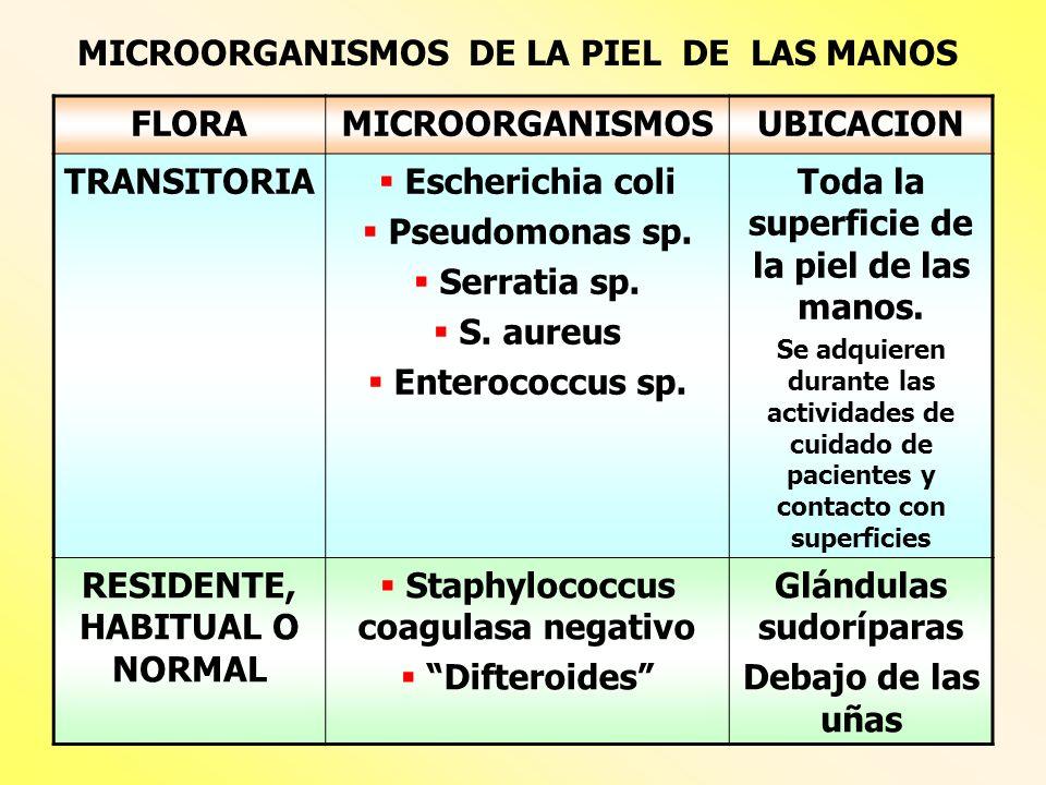 MICROORGANISMOS DE LA PIEL DE LAS MANOS FLORA MICROORGANISMOS