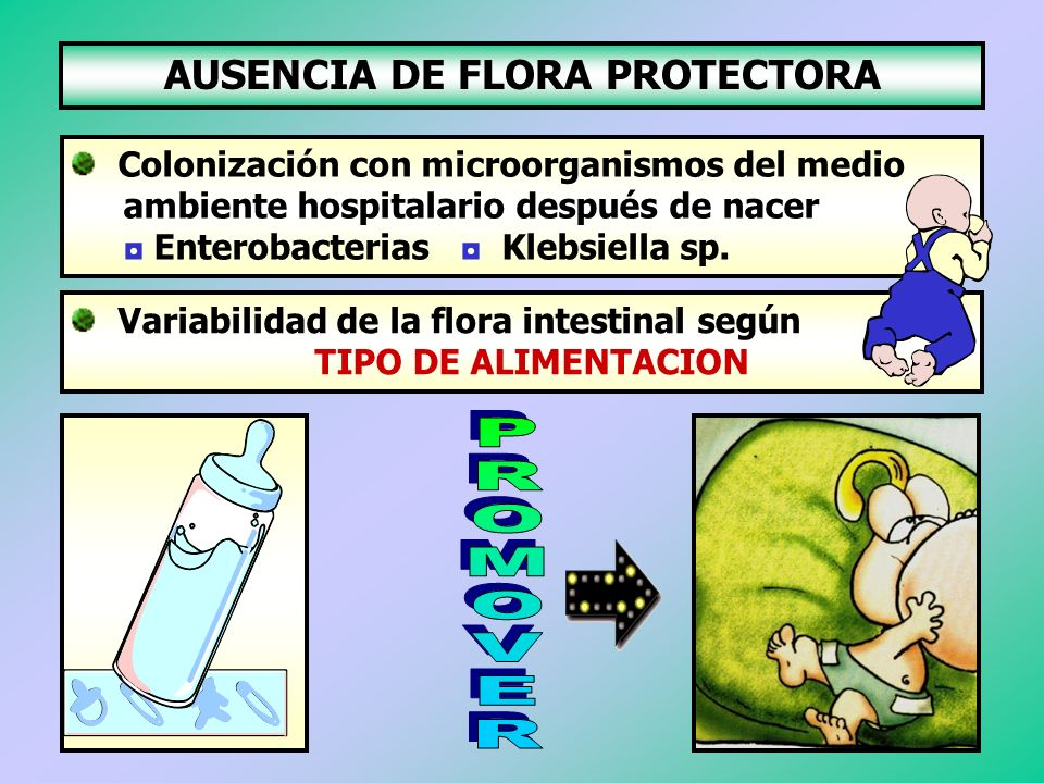 AUSENCIA DE FLORA PROTECTORA