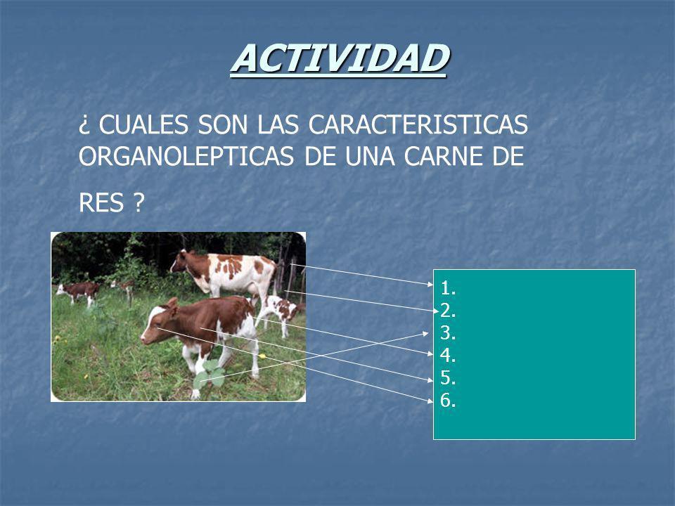 ACTIVIDAD ¿ CUALES SON LAS CARACTERISTICAS ORGANOLEPTICAS DE UNA CARNE DE RES 1. 2. 3. 4. 5. 6.