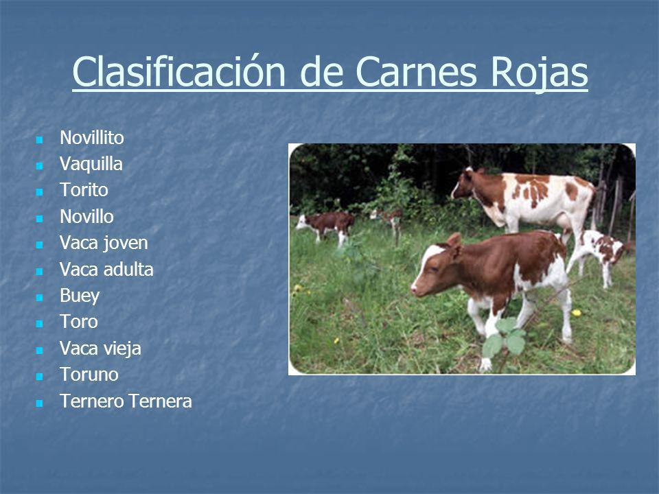 Clasificación de Carnes Rojas