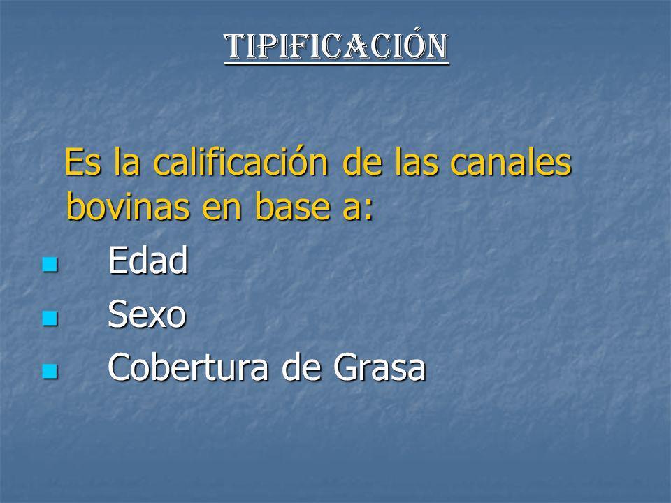 Tipificación Es la calificación de las canales bovinas en base a: Edad Sexo Cobertura de Grasa