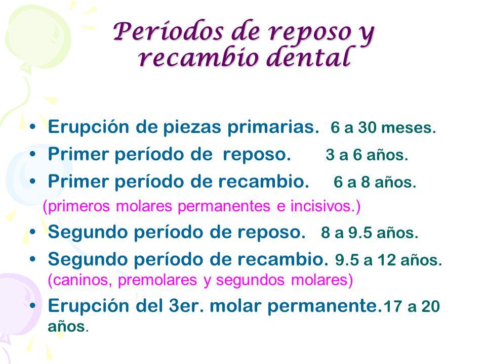 Períodos de reposo y recambio dental