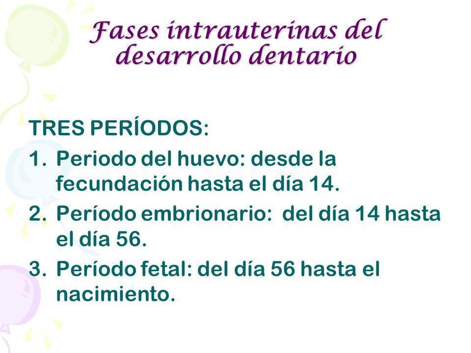 Fases intrauterinas del desarrollo dentario