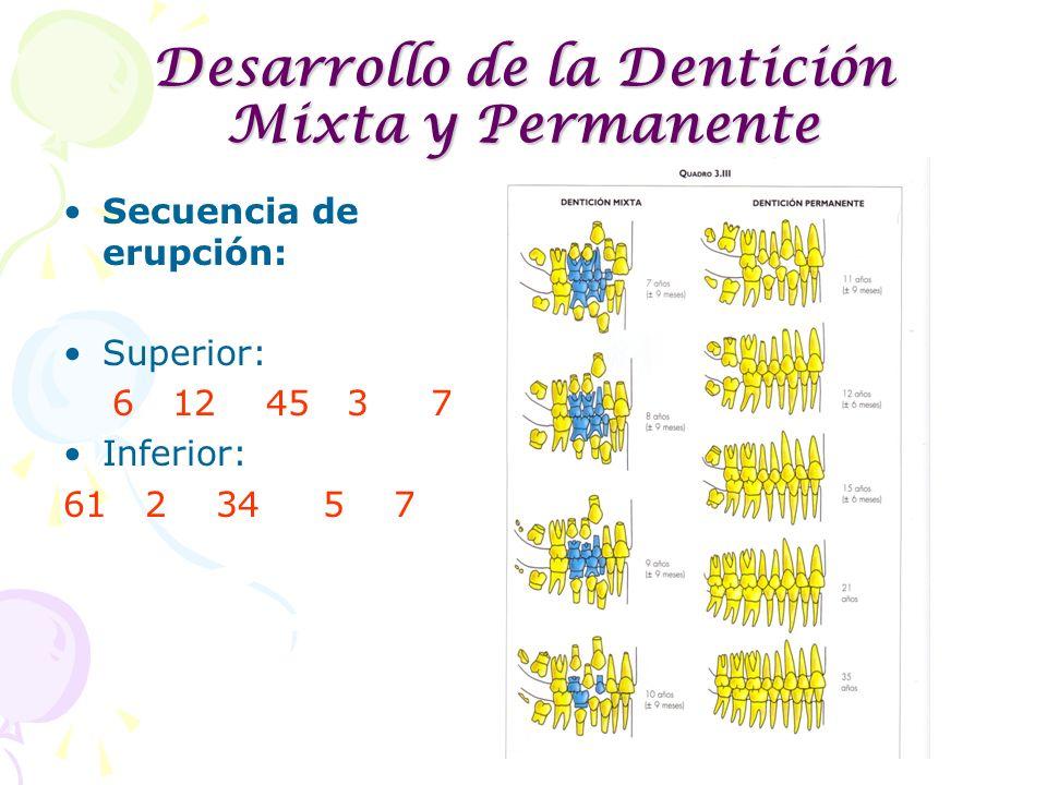 Desarrollo de la Dentición Mixta y Permanente