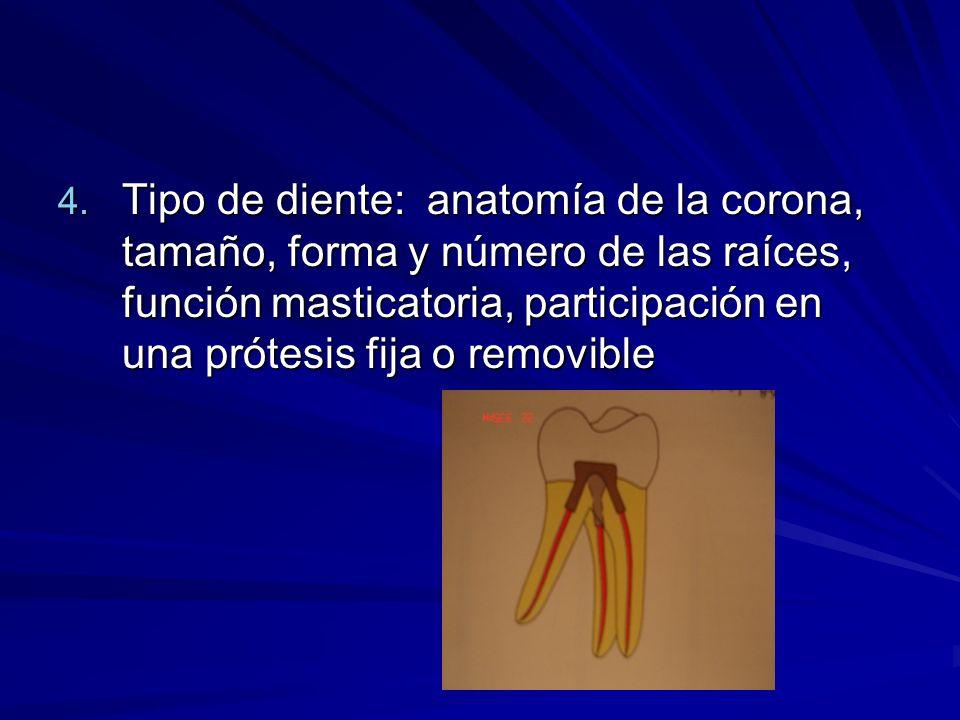Tipo de diente: anatomía de la corona, tamaño, forma y número de las raíces, función masticatoria, participación en una prótesis fija o removible